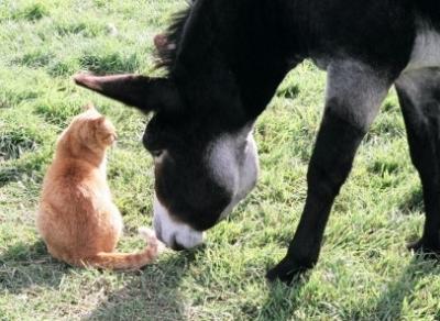 donkey and cat