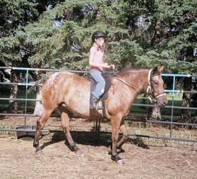 child on appaloosa horse