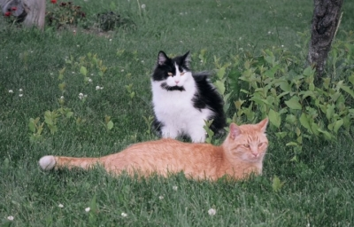 two cats outside
