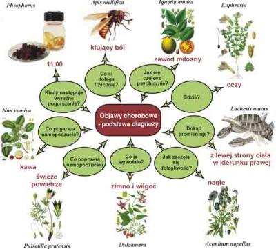 Ignatia homeopathy