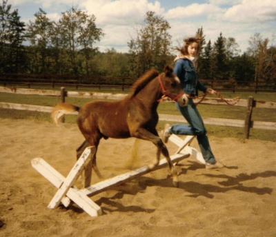 foal being led over a jump