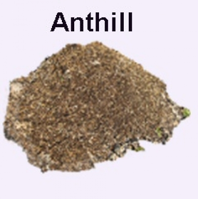 Anthill, source of ant eggs and larvae for food