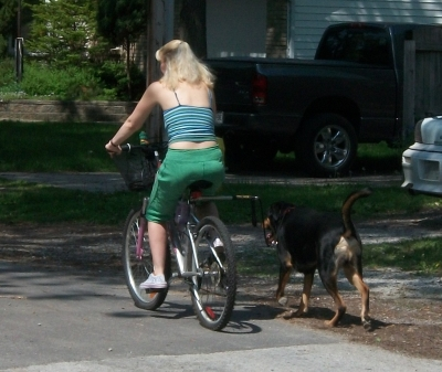 How To Ride Your Bike Safely With Your Dog