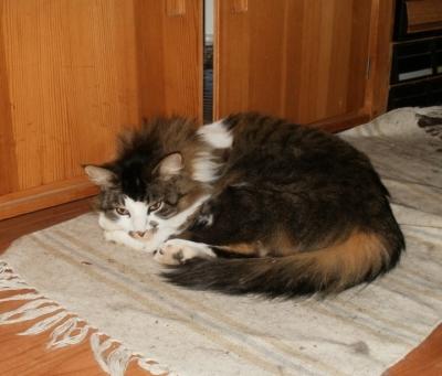 Cat scratch pregnant