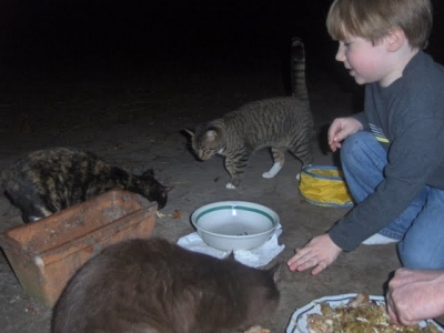 My son feeding some leftovers to the feral cats