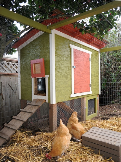 small backyard chicken coop