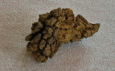 coprolite: fossilized dinosaur poop from the collection of author
