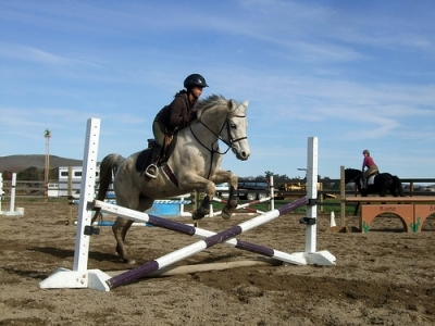 well trained horse jumping crosspole