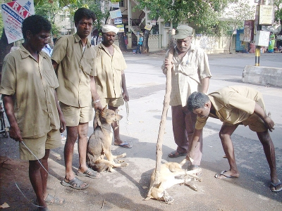 feral dogs in India
