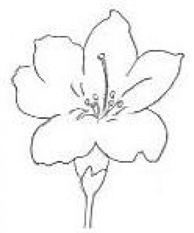 Easy To Draw Flowers For Pinterest