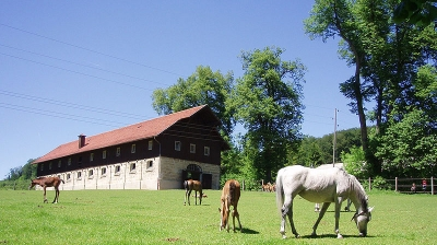 happy mares and foals in a pasture