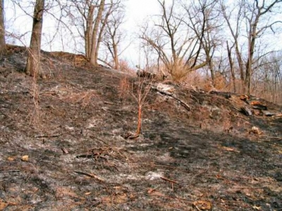 hillside after a controlled burn, called swailing