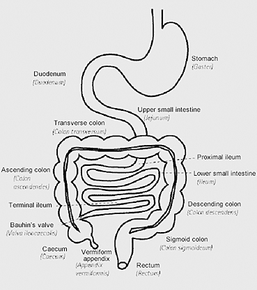 9683 as well 3736413 furthermore Search in addition Simple Acupressure Routines additionally 1374578list. on structure of the large intestine