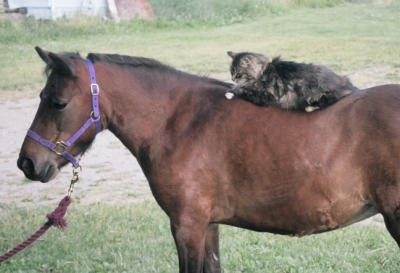 cat on horse