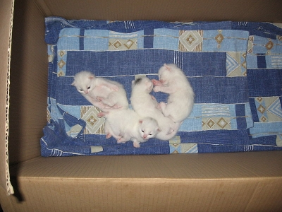 young kittens in box