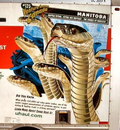 Manitoba (Canada) garter snake den where thousands of snake gather