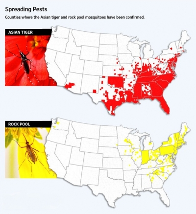 New Mosquito Species Spreading In The United States - Mosquito map us