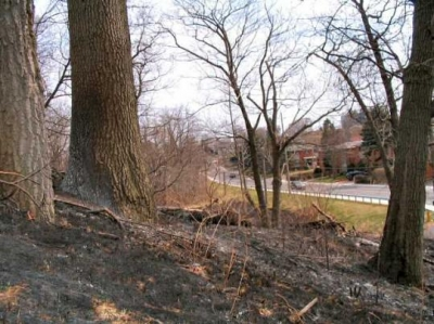 controlled burn site the next day