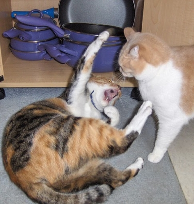 Cats, Cat Fight