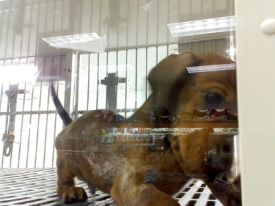 puppy in a boring pet store cage