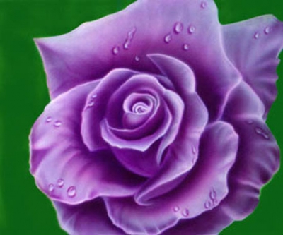 meaning of roses by color, Natural flower