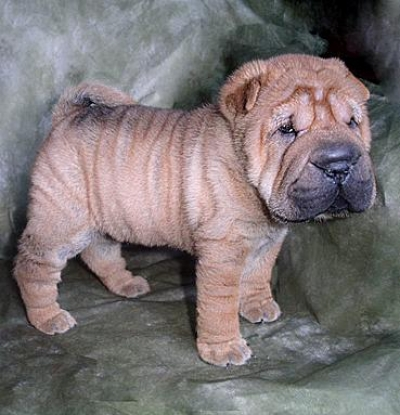 List Of Unique Breed Of Dogs Absolutely Rare